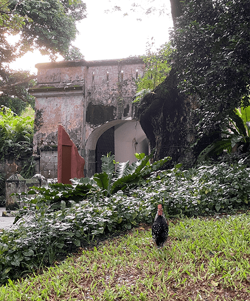 6 child friendly nature walks fort canning singapore